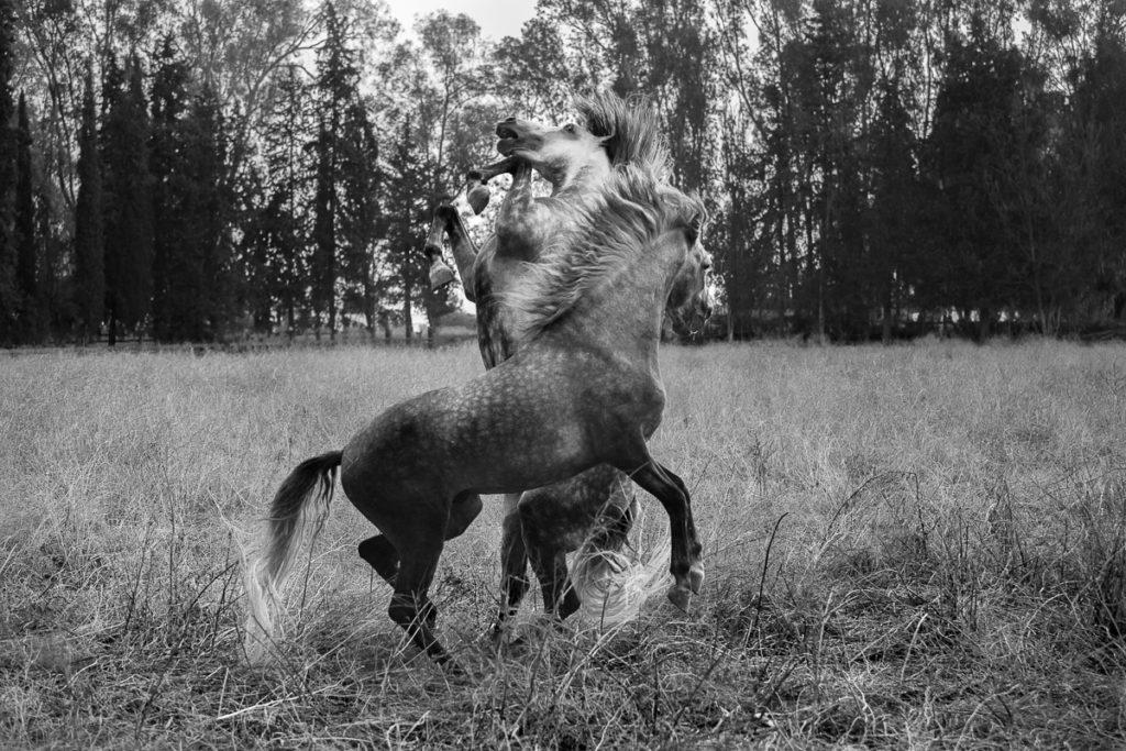 Jérémy Durand – Photographie équine